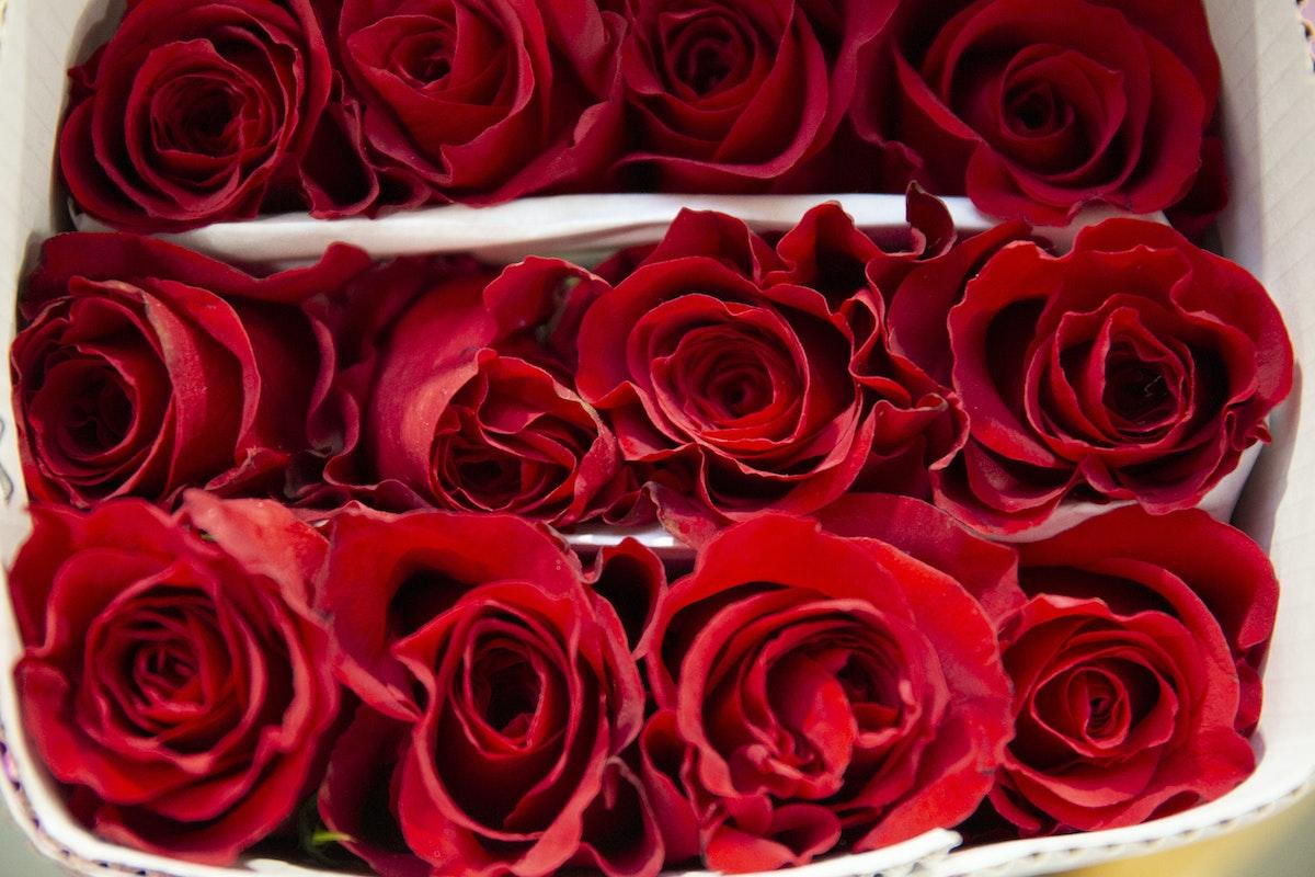 New Covent Garden Flower Market February 2020 In Season Report Rona Wheeldon Flowerona Freedom Roses At Zest Flowers