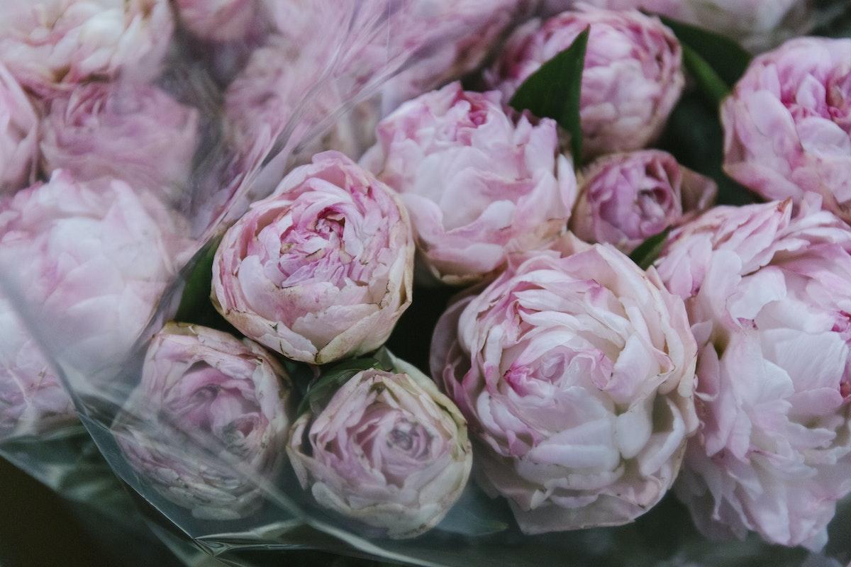 New Covent Garden Flower Market February 2020 In Season Report Rona Wheeldon Flowerona Gardenia Peonies At Dg Wholesale Flowers