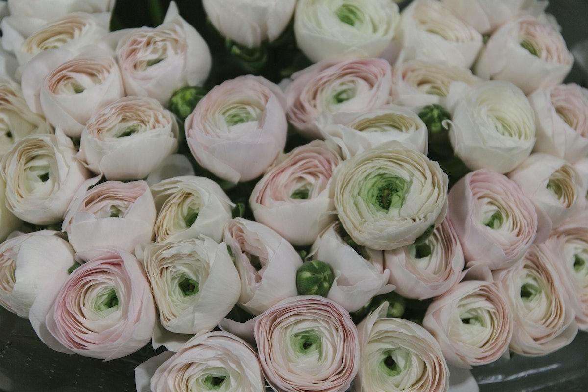 New Covent Garden Flower Market February 2020 In Season Report Rona Wheeldon Flowerona Hanoi Cloni Ranunculus At Dg Wholesale Flowers