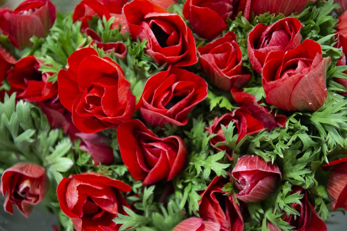 New Covent Garden Flower Market February 2020 In Season Report Rona Wheeldon Flowerona Red Anemones At Zest Flowers