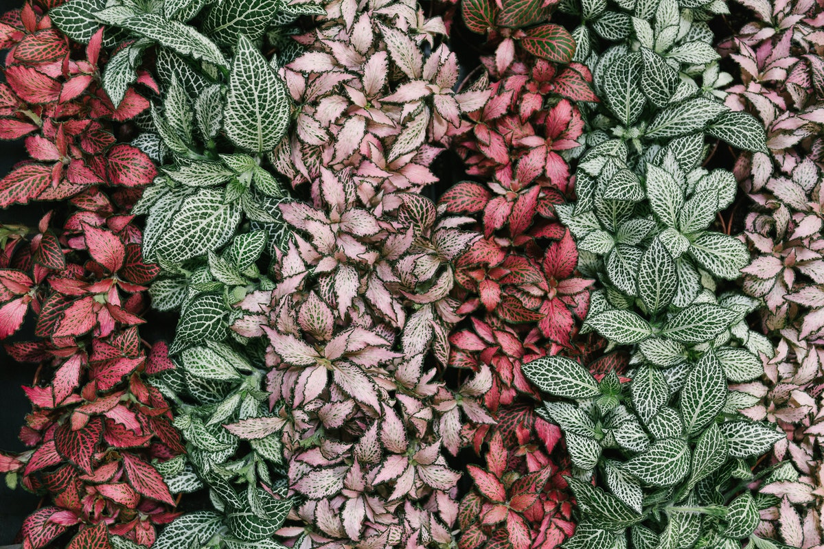 New Covent Garden Flower Market In Season Report November 2017 Rona Wheeldon Floweorona Fittonia At Arnott Mason