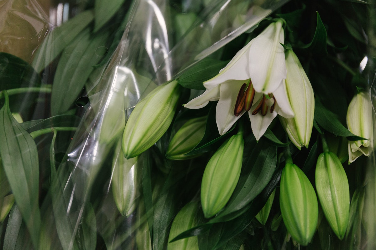 New Covent Garden Flower Market In Season Report November 2017 Rona Wheeldon Flowerona British Ascot White Oriental Lilies At Pratley