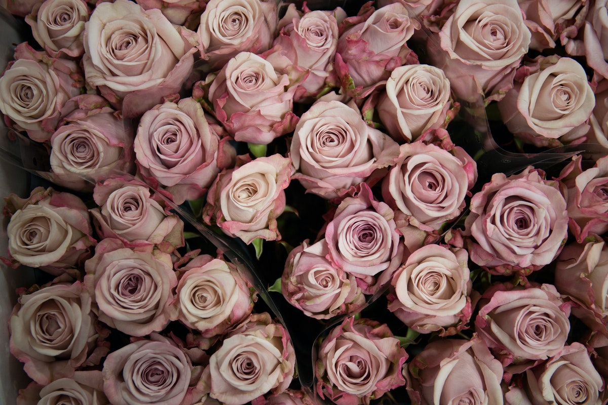 New Covent Garden Flower Market In Season Report November 2017 Rona Wheeldon Flowerona Lovelace Rose At Dennis Edwards Flowers