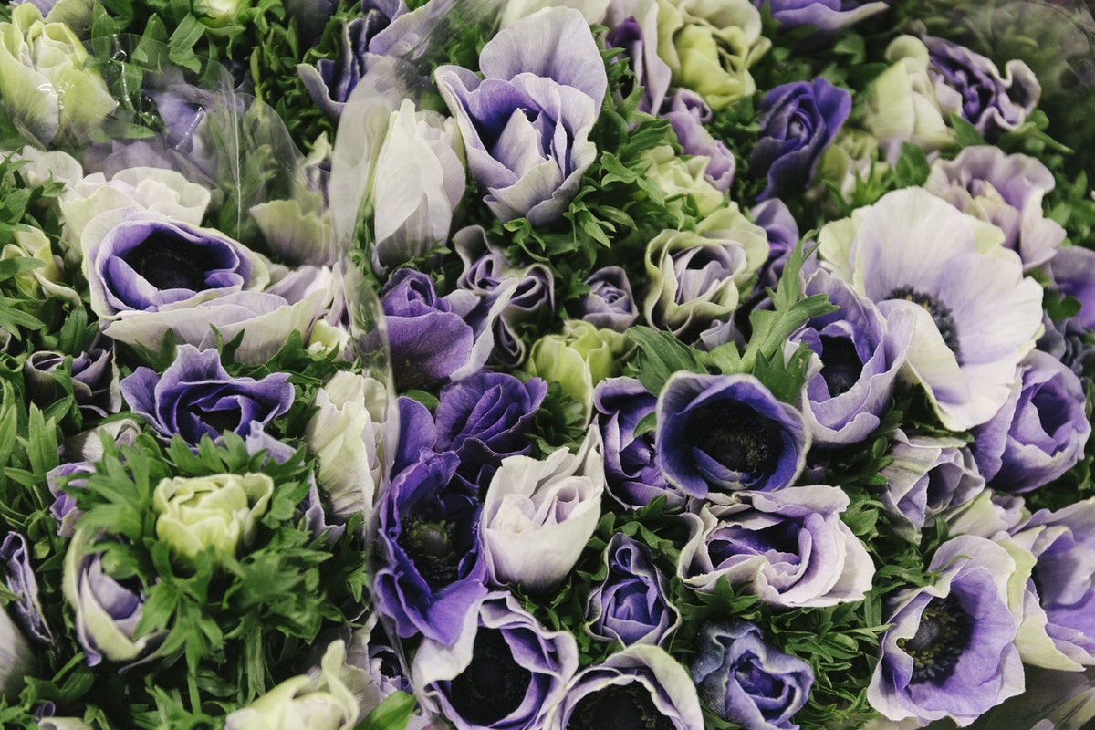New Covent Garden Flower Market January 2019 In Season Report Rona Wheeldon Flowerona Anemone Mistral Azzurro At D G Wholesale Flowers