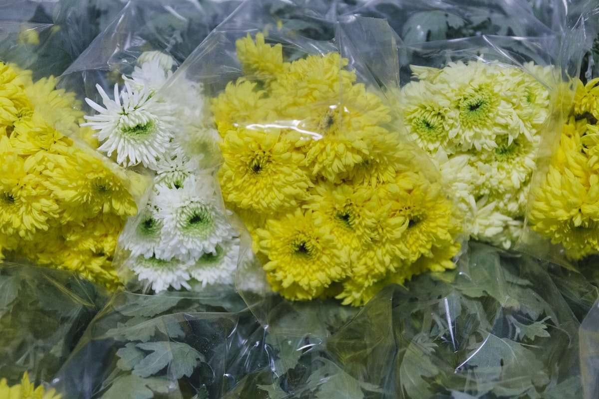 New Covent Garden Flower Market January 2019 In Season Report Rona Wheeldon Flowerona British Mixed Chrysanthemums At Pratley