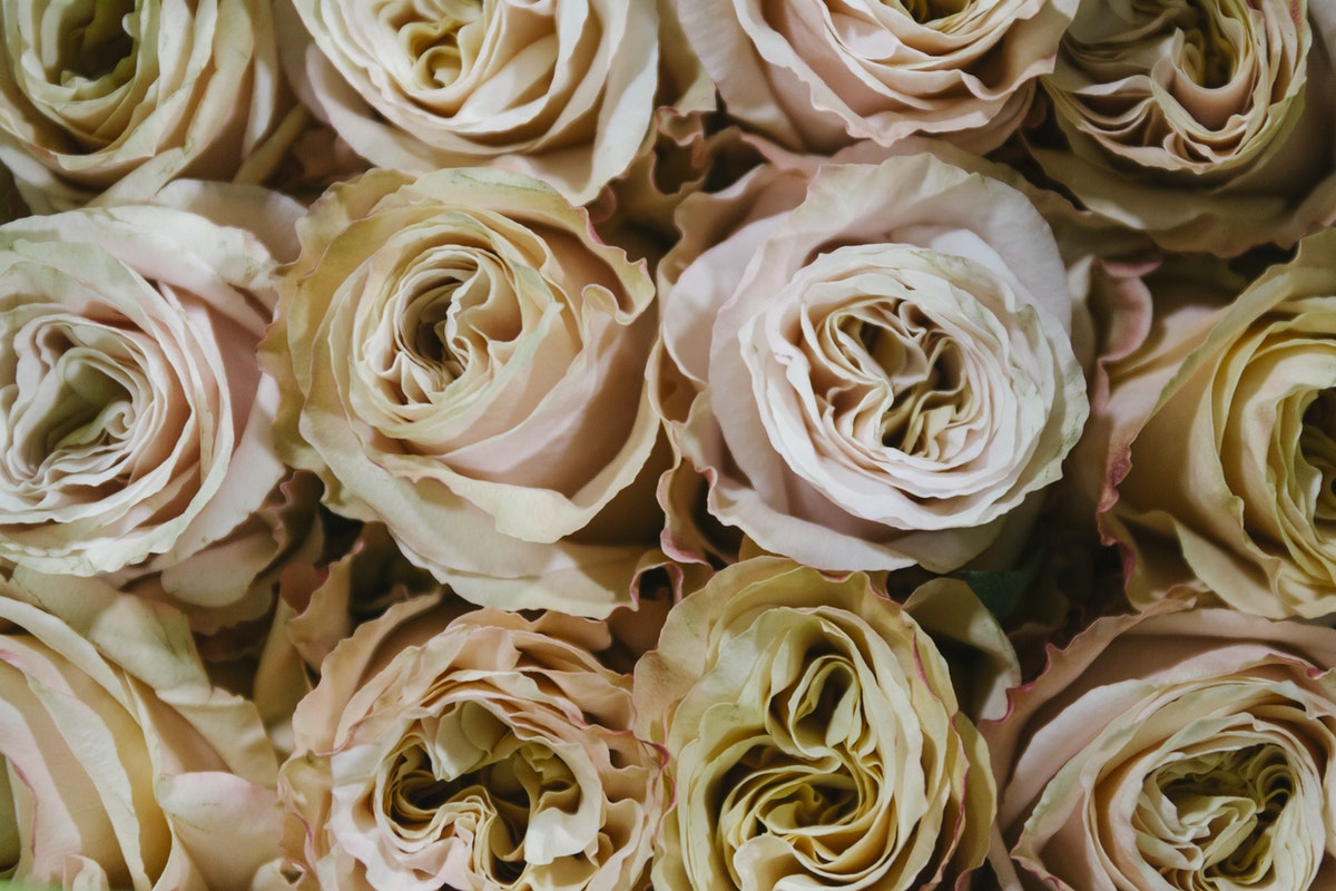 New Covent Garden Flower Market January 2019 In Season Report Rona Wheeldon Flowerona Shimmer Rose At Bloomfield