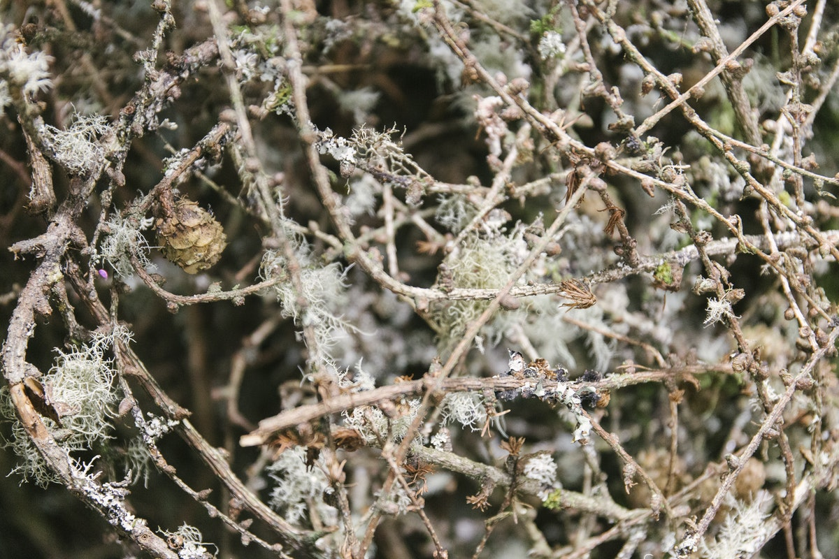 New Covent Garden Flower Market January 2020 In Season Report Rona Wheeldon Flowerona British Lichen Twigs At Porters Foliage