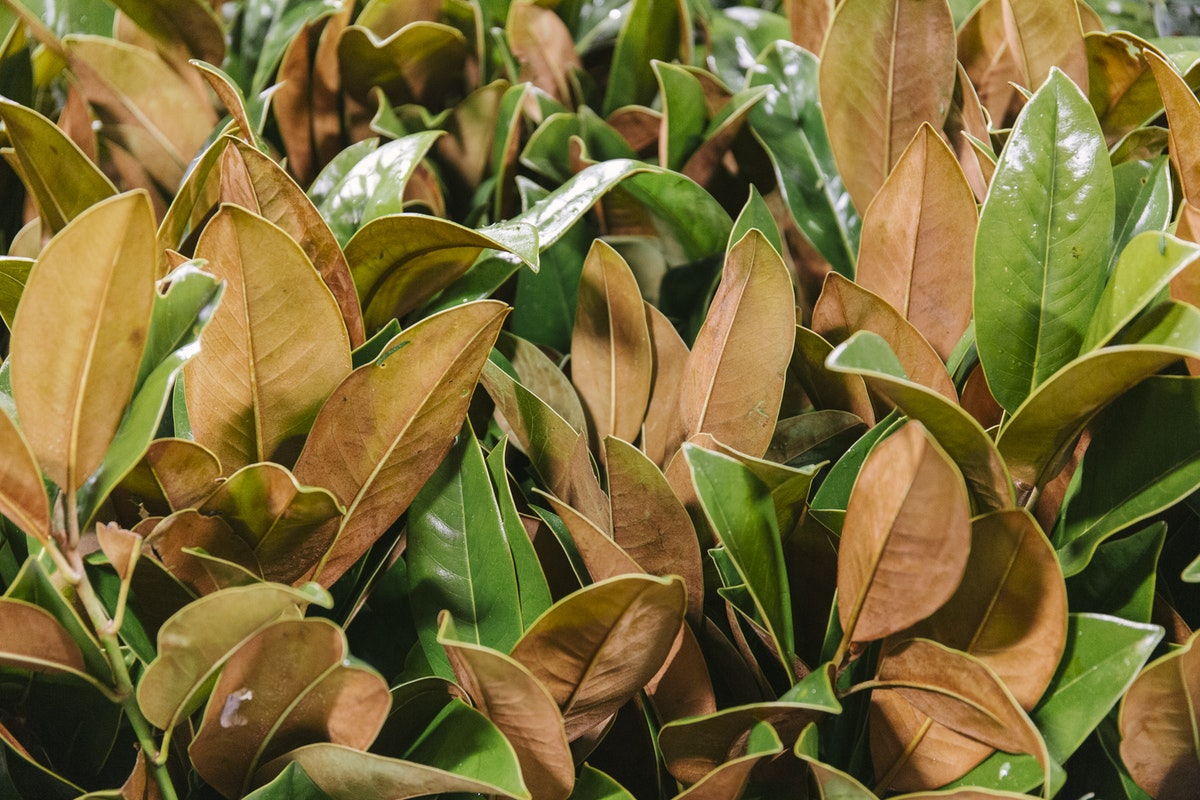 New Covent Garden Flower Market January 2020 In Season Report Rona Wheeldon Flowerona British Magnolia Foliage At Gb Foliage