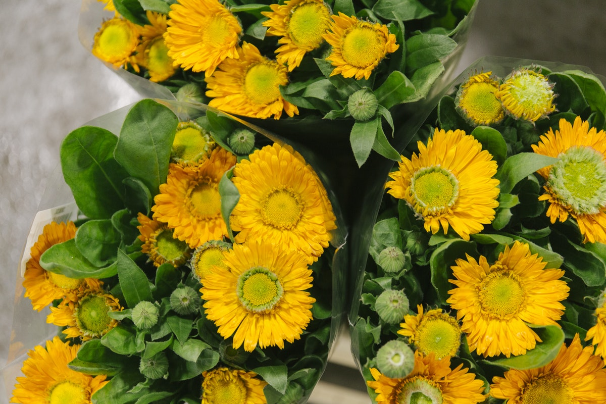 New Covent Garden Flower Market January 2020 In Season Report Rona Wheeldon Flowerona Calendula At Bloomfield