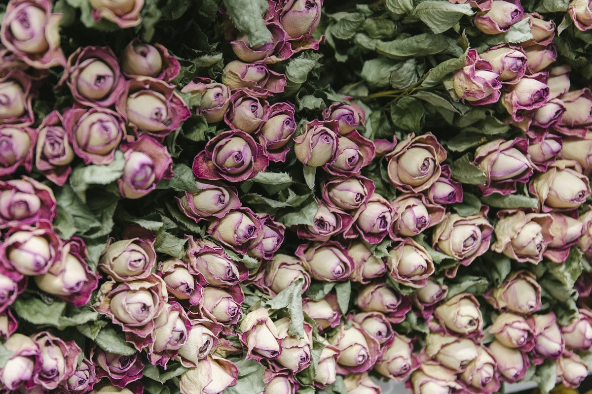 New Covent Garden Flower Market January 2020 In Season Report Rona Wheeldon Flowerona Dried Pink Spray Roses At Lavenders Of Covent Garden