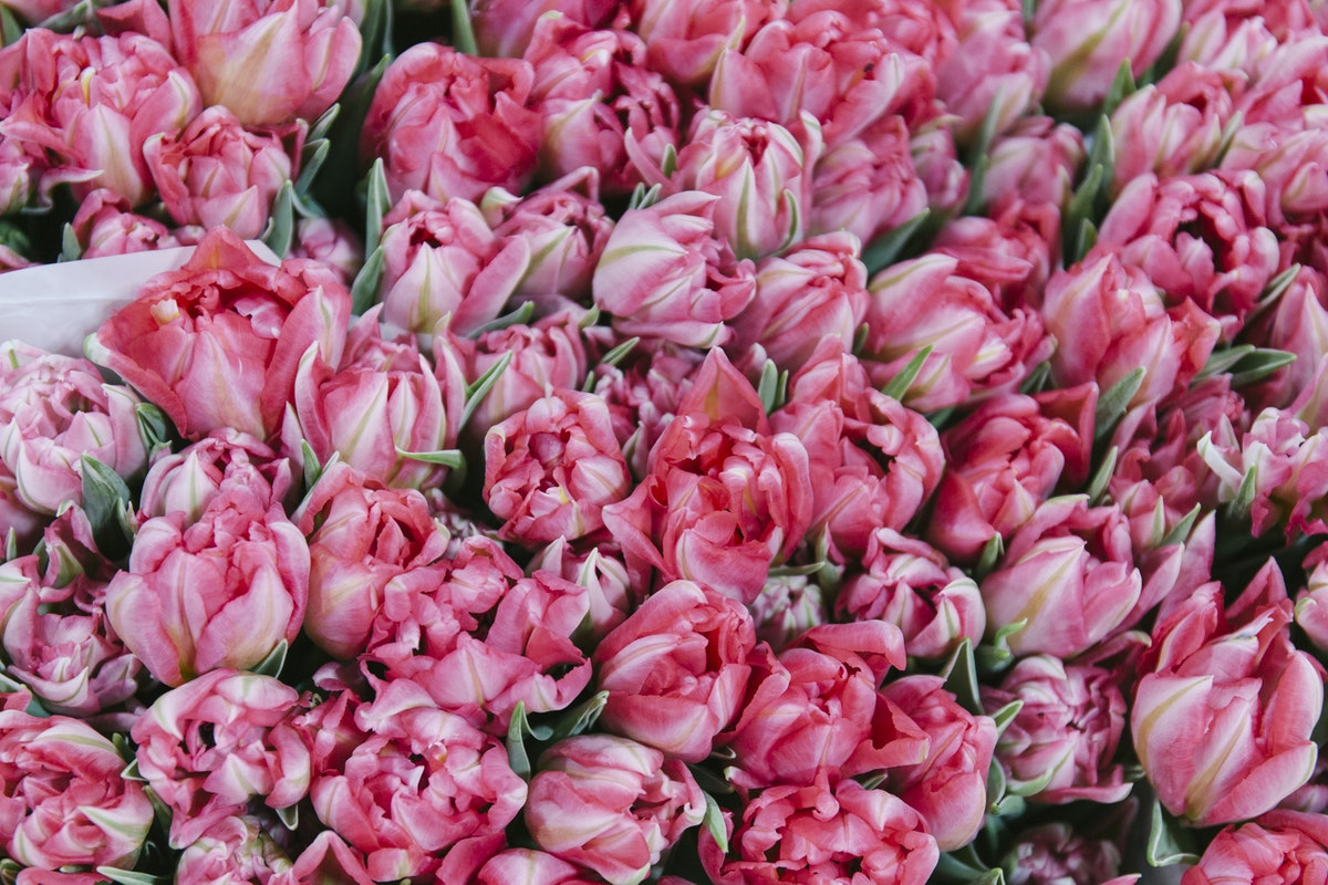 New Covent Garden Flower Market January 2020 In Season Report Rona Wheeldon Flowerona Flash Point Tulips At Dg Wholesale Flowers