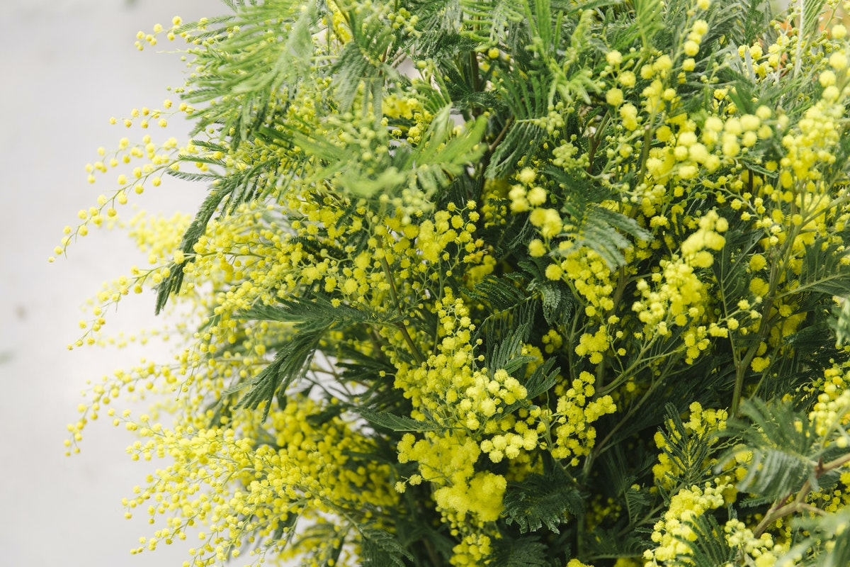 New Covent Garden Flower Market January 2020 In Season Report Rona Wheeldon Flowerona Mimosa At Dennis Edwards Flowers
