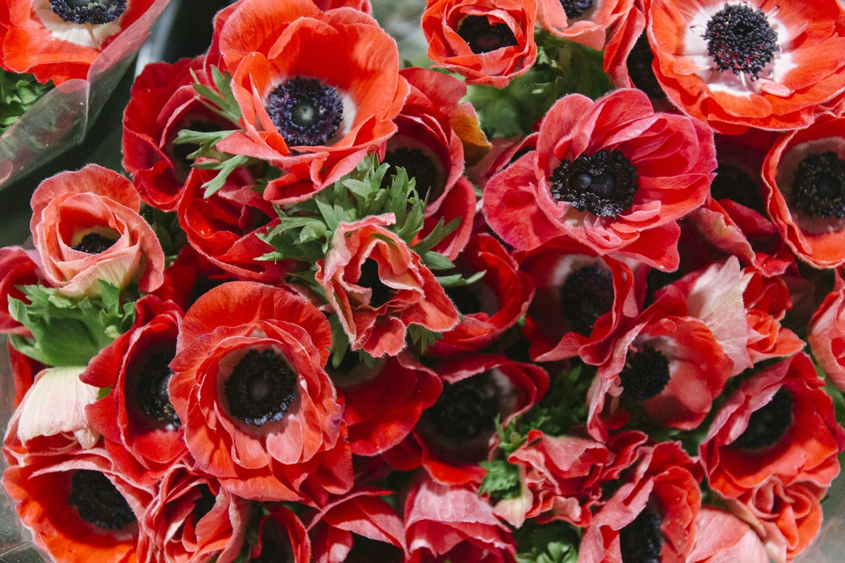 New Covent Garden Flower Market January 2020 In Season Report Rona Wheeldon Flowerona Red Anemones At D G Wholesale Flowers