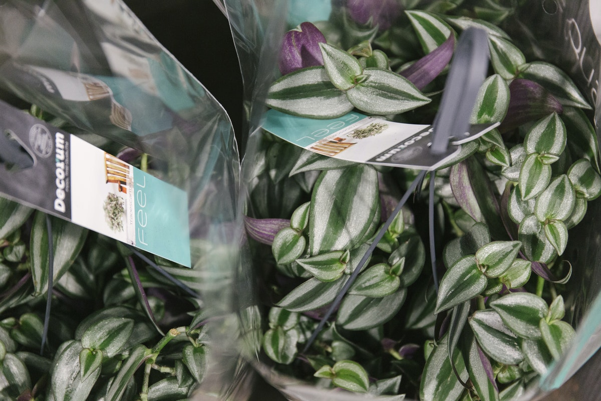 New Covent Garden Flower Market January 2020 In Season Report Rona Wheeldon Flowerona Tradescantia Plants At Quality Plants