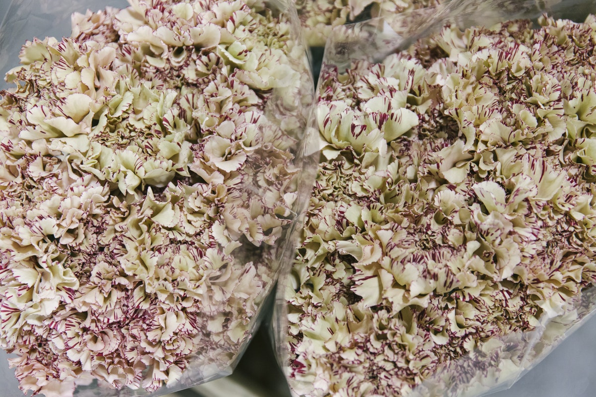 New Covent Garden Flower Market January 2020 In Season Report Rona Wheeldon Flowerona Viper Carnation At Zest Flowers