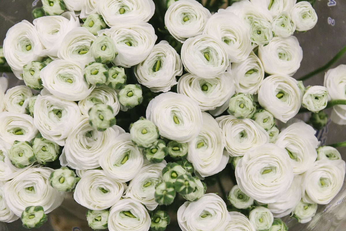 New Covent Garden Flower Market January 2020 In Season Report Rona Wheeldon Flowerona White Ranunculus Firenze At Bloomfield
