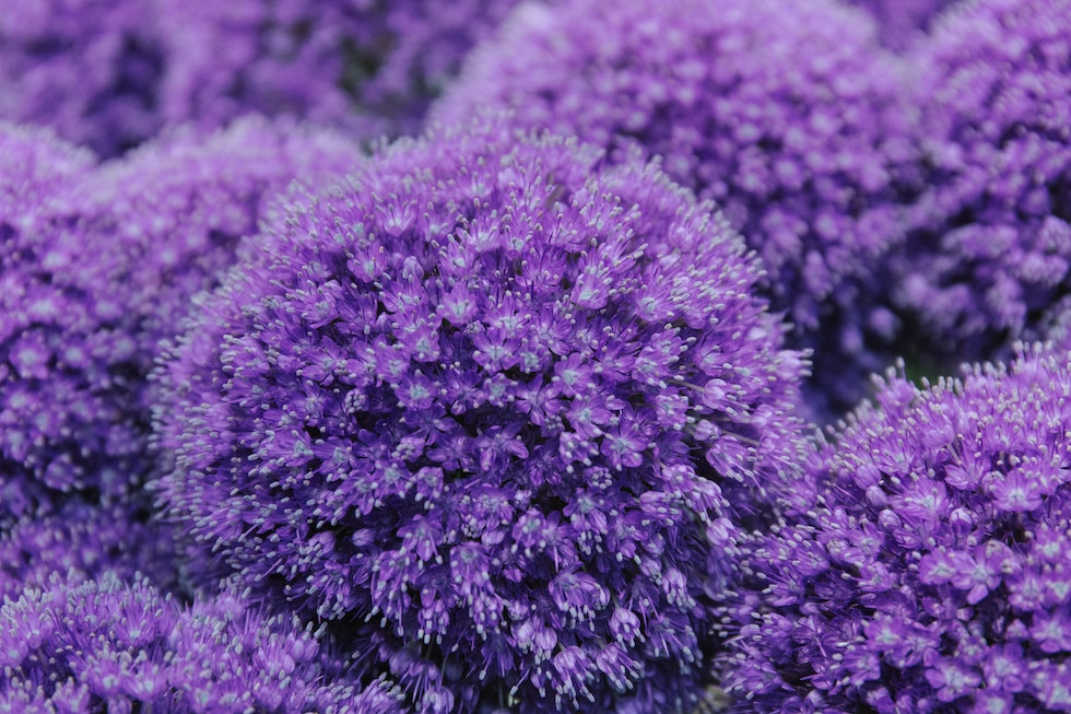 A florist's guide to ultra violet - Pantone Color of the Year 2018
