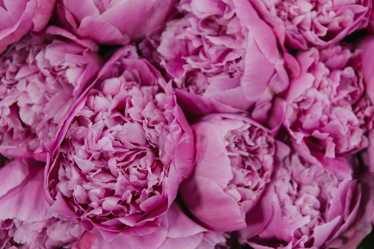 New Covent Garden Flower Market July 2018 In Season Report Rona Wheeldon Flowerona Jacorma Peony At Bloomfield