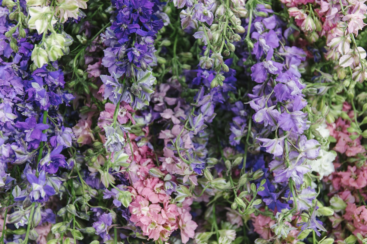 New Covent Garden Flower Market July 2019 In Season Report Rona Wheeldon Flowerona British Larkspur At Pratley Hero Image