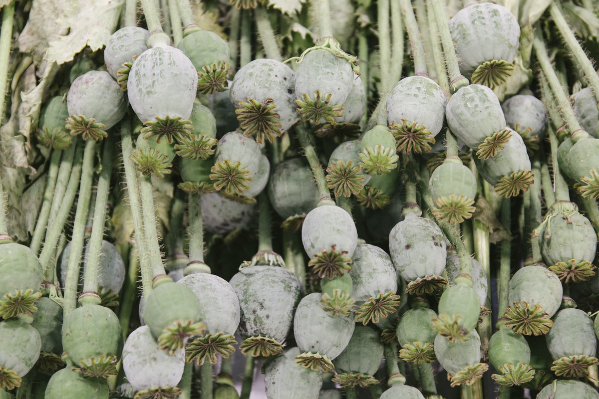 New Covent Garden Flower Market July 2019 In Season Report Rona Wheeldon Flowerona British Poppy Seed Heads At Pratley