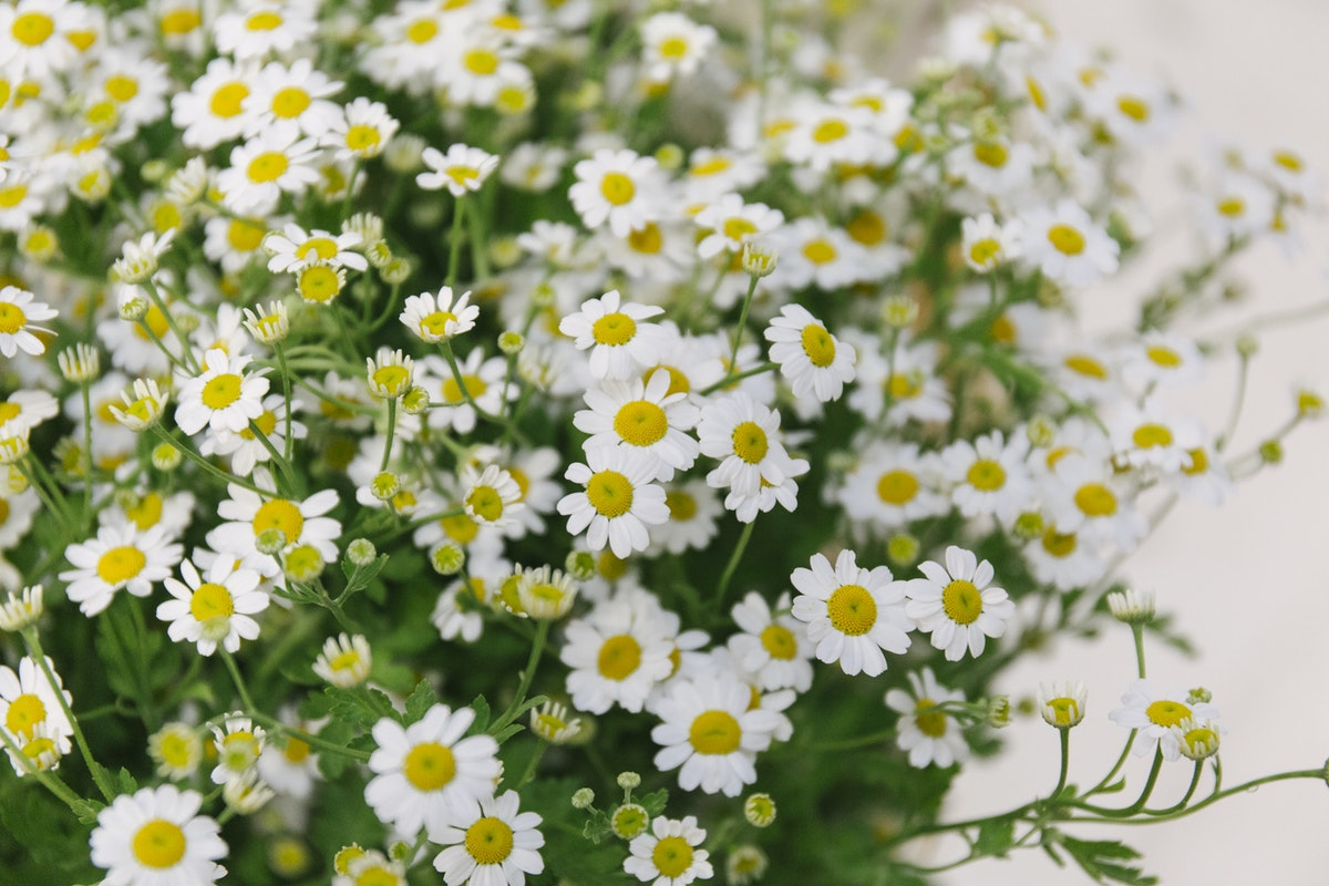 New Covent Garden Flower Market July 2019 In Season Report Rona Wheeldon Flowerona British Tanacetum At Zest Flowers
