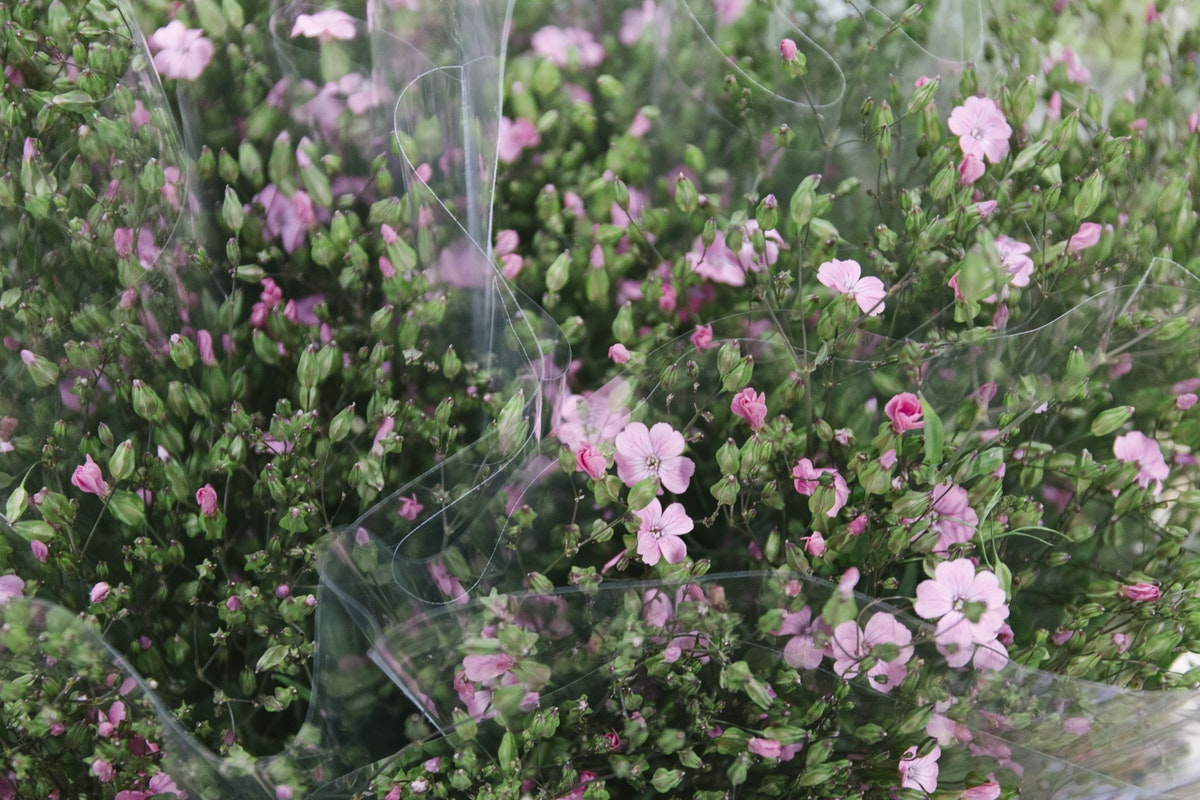 New Covent Garden Flower Market July 2019 In Season Report Rona Wheeldon Flowerona Pink Saponaria At Zest Flowers