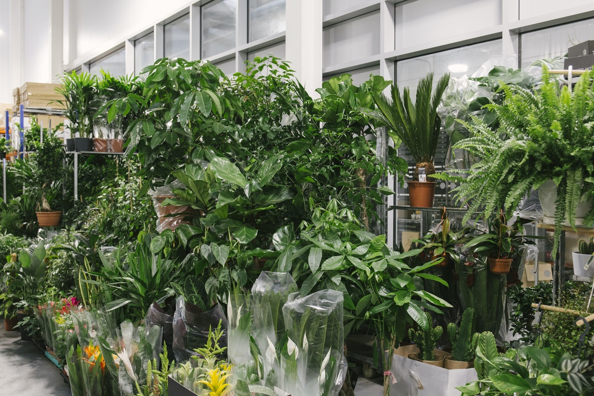 New Covent Garden Flower Market July 2019 In Season Report Rona Wheeldon Flowerona Plant Display At Quality Plants