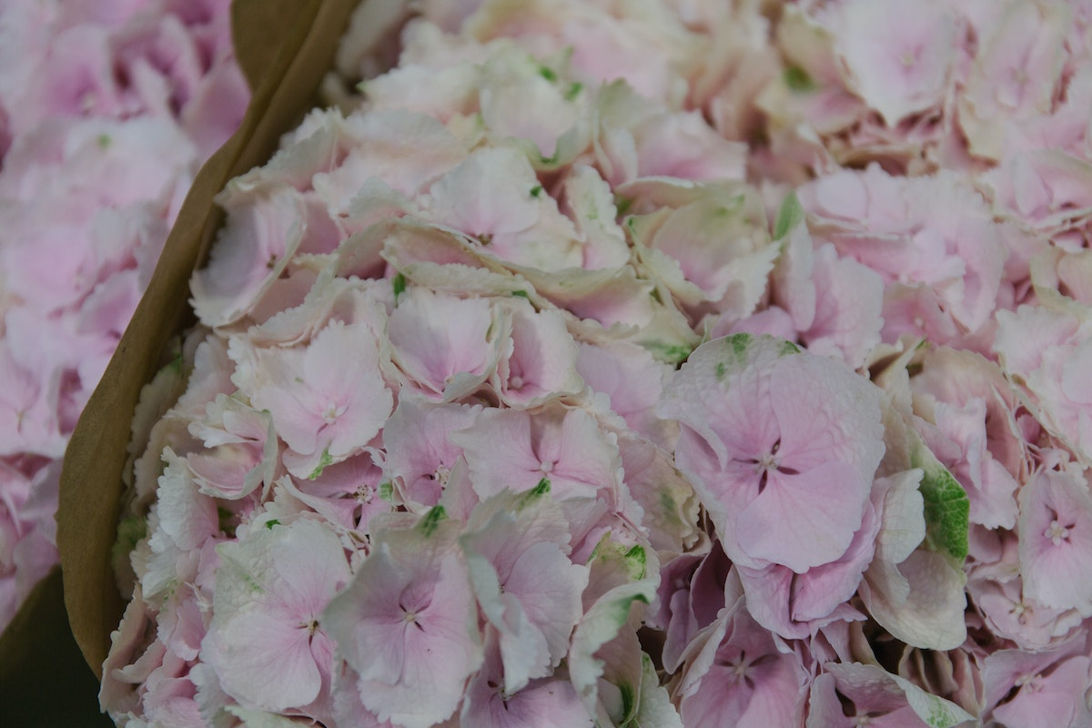 New Covent Garden Flower Market June 2018 In Season Report Rona Wheeldon Flowerona Hydrangea Mariama At Dg Wholesale Flowers