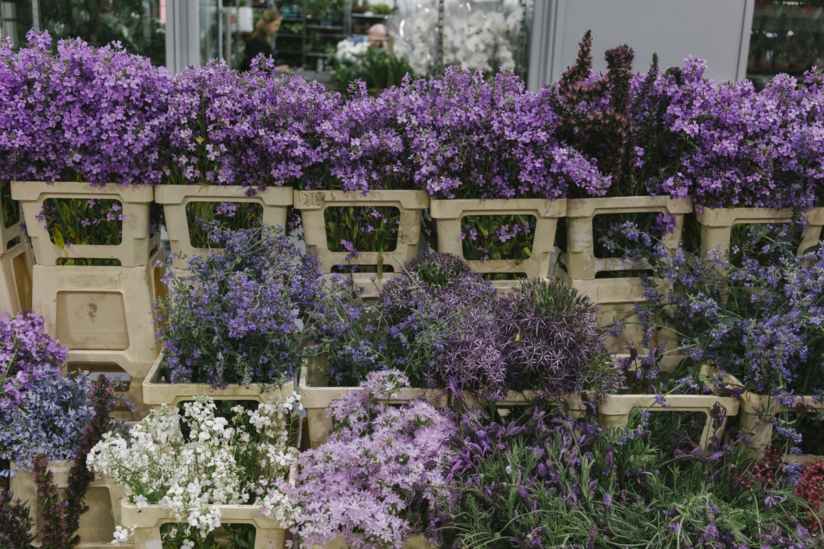 New Covent Garden Flower Market June 2019 A Florists Guide To British Flowers Rona Wheeldon Flowerona British Flowers Display At Zest Flowers