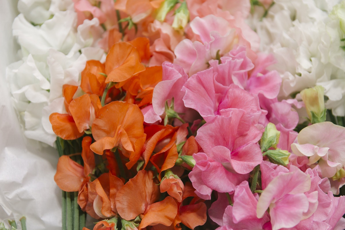 New Covent Garden Flower Market June 2019 A Florists Guide To British Flowers Rona Wheeldon Flowerona British Sweet Peas At Pratley