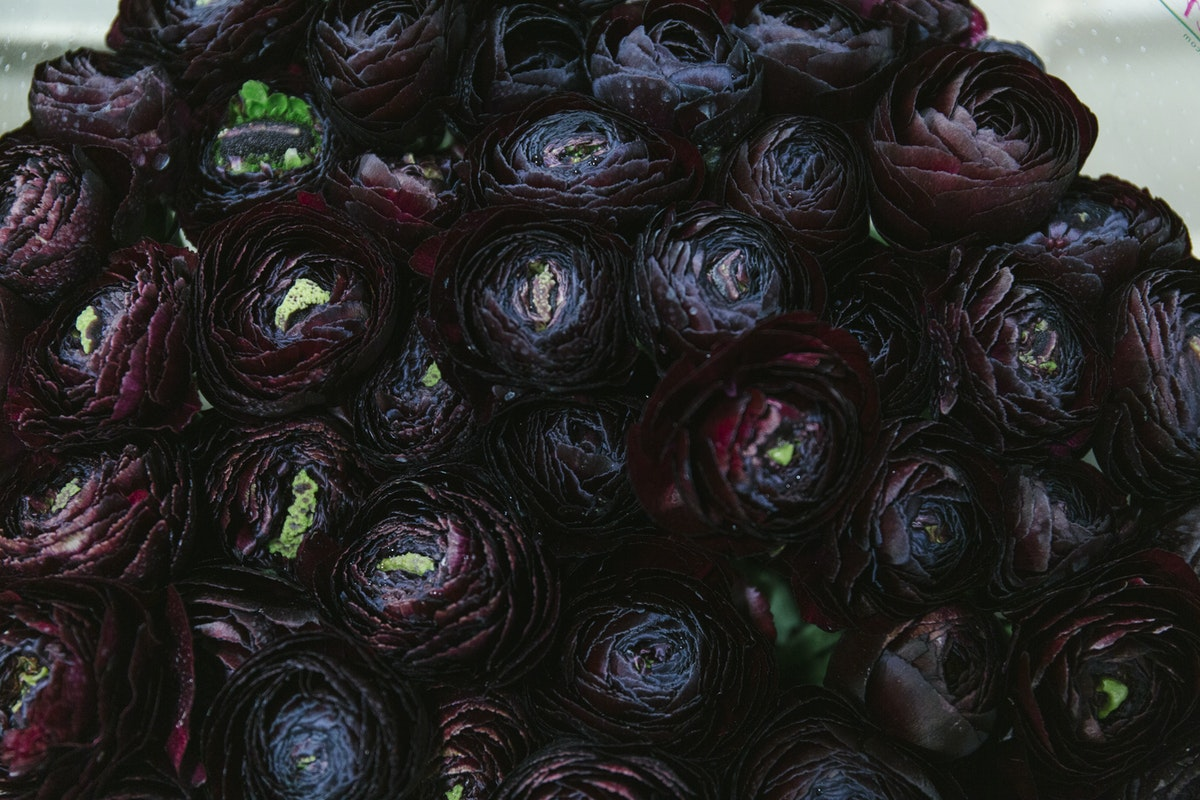 New Covent Garden Flower Market March 2019 A Florists Guide To Ranunculus Rona Wheeldon Flowerona Burgundy Ranunculus