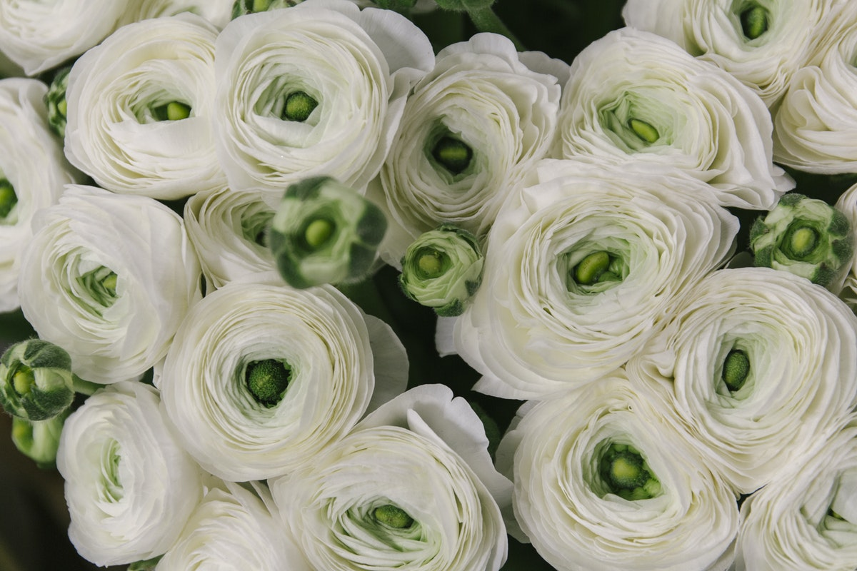 New Covent Garden Flower Market March 2019 A Florists Guide To Ranunculus Rona Wheeldon Flowerona Firenze Cloni Ranunculus At Dennis Edwards Flowers