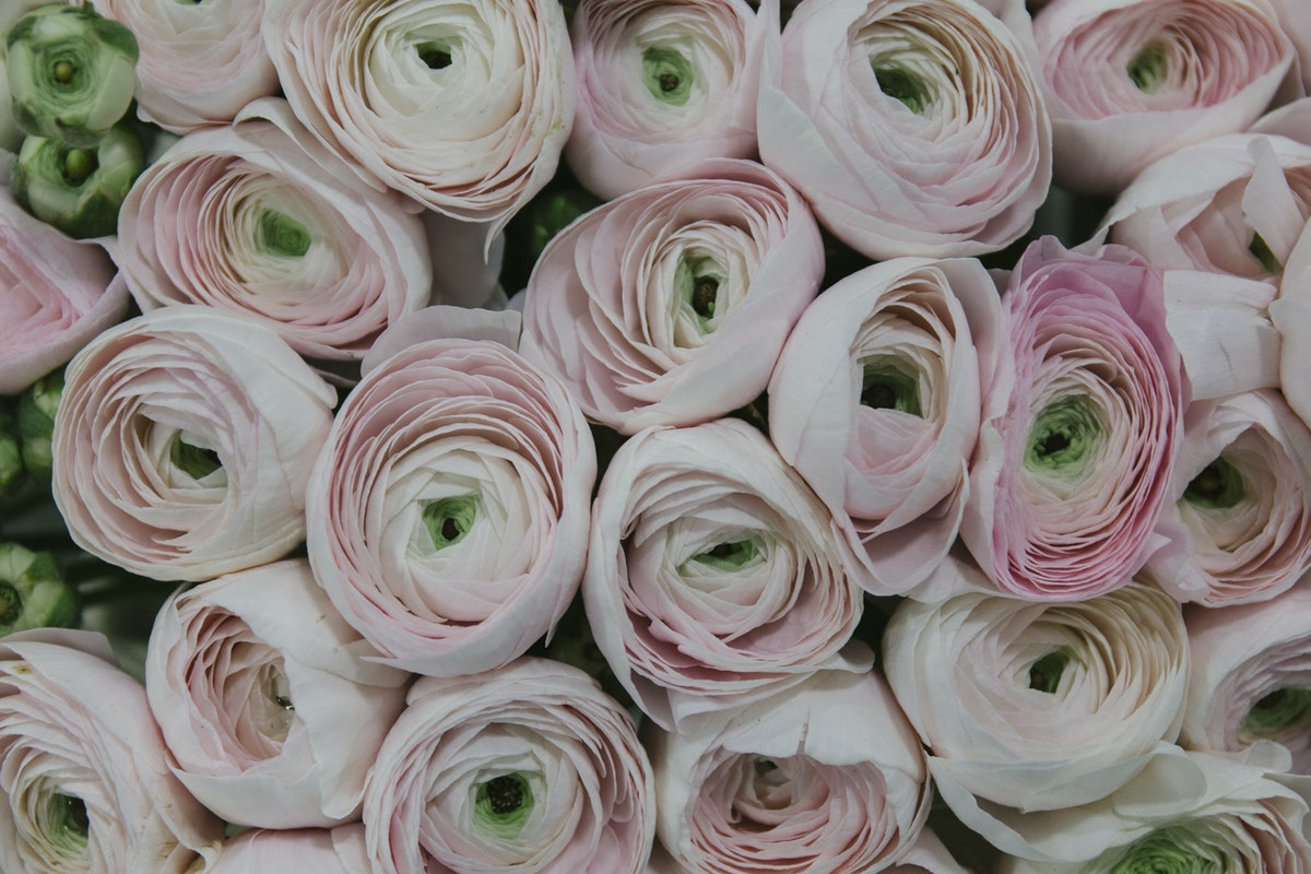 New Covent Garden Flower Market March 2019 A Florists Guide To Ranunculus Rona Wheeldon Flowerona Hanoi Cloni Ranunculus At Bloomfield