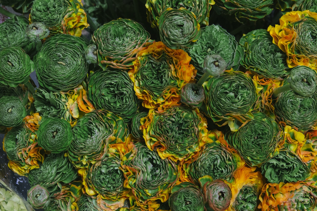 New Covent Garden Flower Market March 2019 A Florists Guide To Ranunculus Rona Wheeldon Flowerona Merlino Cloni Pon Pon Ranunculus