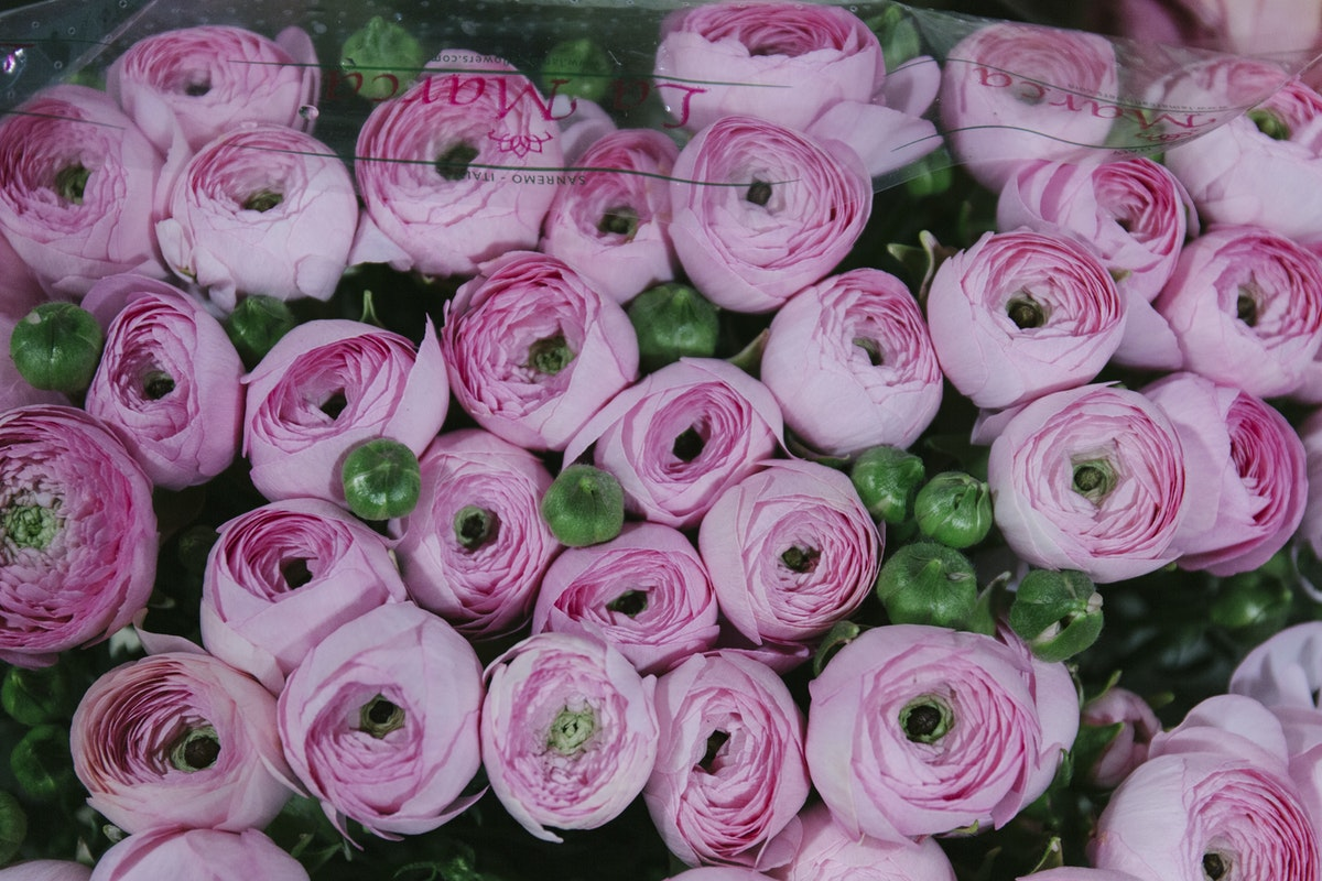 New Covent Garden Flower Market March 2019 A Florists Guide To Ranunculus Rona Wheeldon Flowerona Pink Cloni Ranunculus At Dg Wholesale Flowers 1
