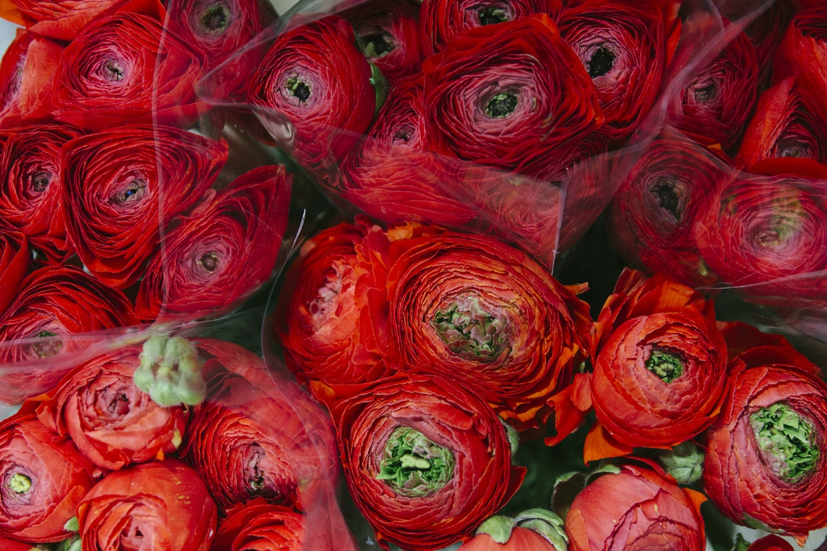 New Covent Garden Flower Market March 2019 A Florists Guide To Ranunculus Rona Wheeldon Flowerona Red Cloni Ranunculus At Zest Flowers