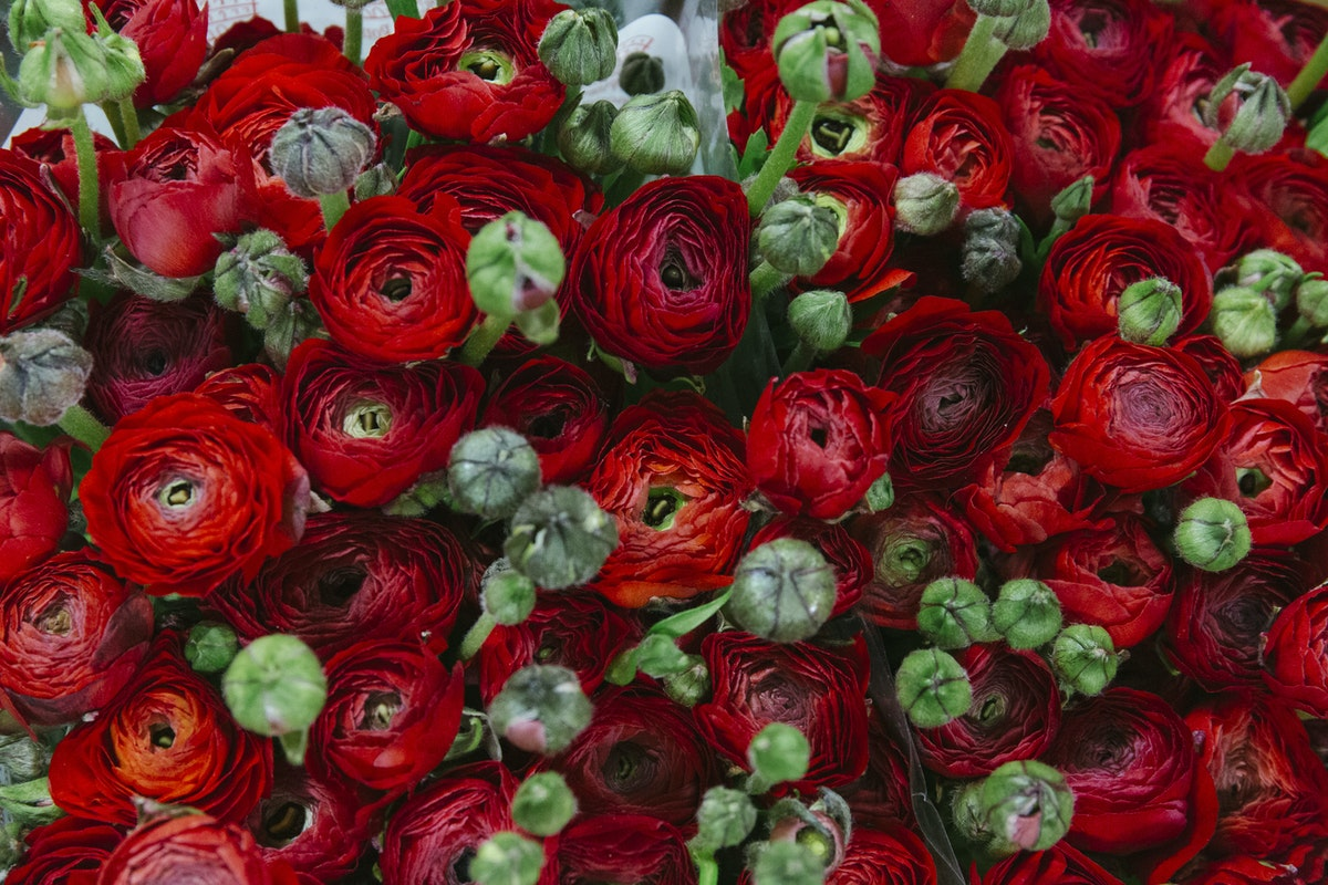 New Covent Garden Flower Market March 2019 A Florists Guide To Ranunculus Rona Wheeldon Flowerona Red Elegance Ranunculus At Dennis Edwards Flowers