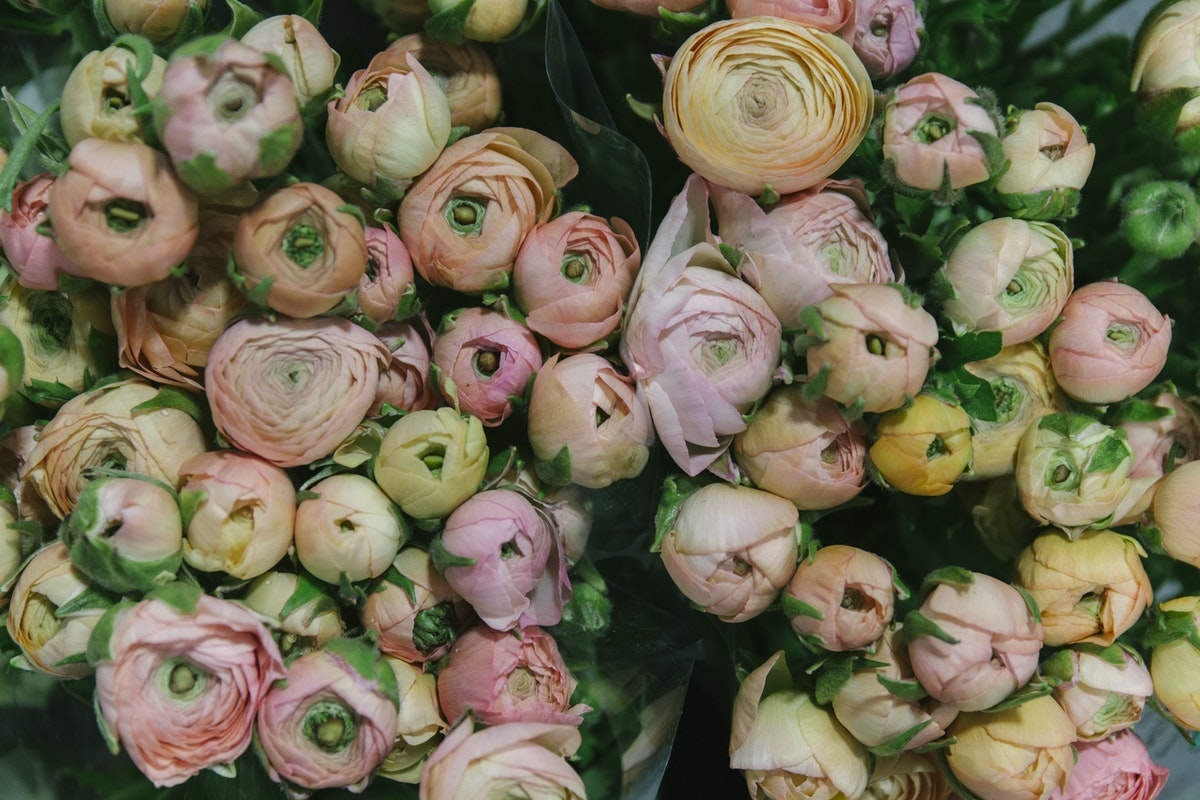 New Covent Garden Flower Market March 2019 A Florists Guide To Ranunculus Rona Wheeldon Flowerona Salmon Elegance Ranunculus At Dg Wholesale Flowers