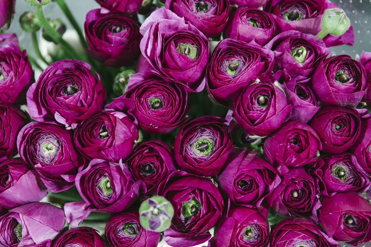 New Covent Garden Flower Market March 2019 A Florists Guide To Ranunculus Rona Wheeldon Flowerona Sherry Cloni Ranunculus At Dg Wholesale Flowers