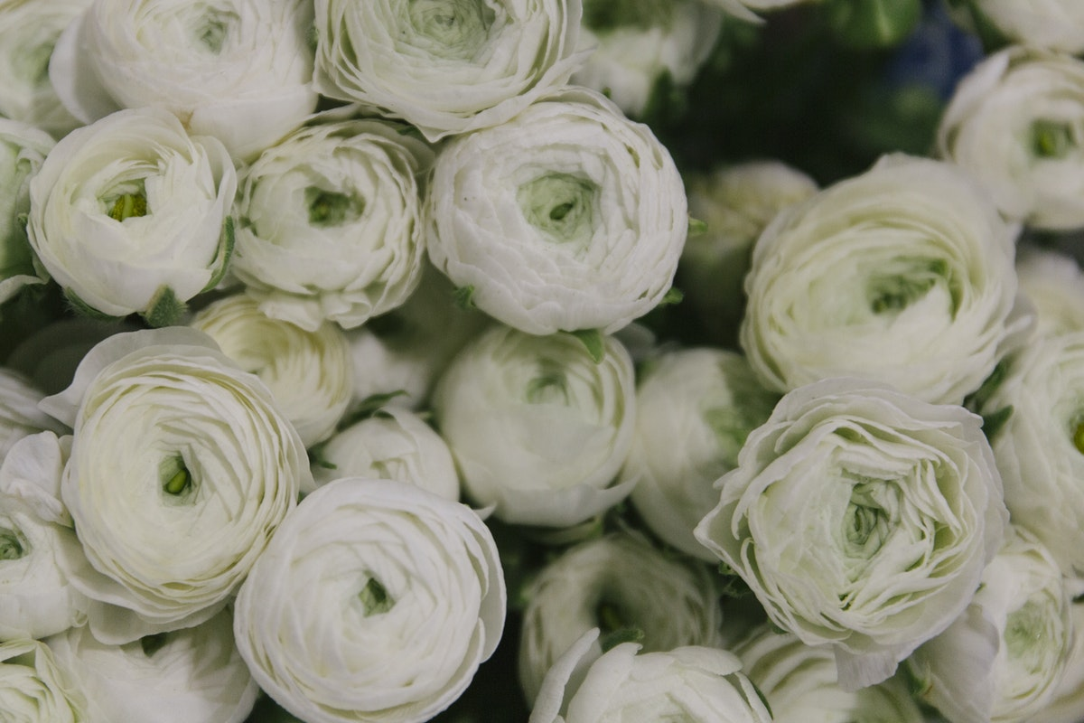 New Covent Garden Flower Market March 2019 A Florists Guide To Ranunculus Rona Wheeldon Flowerona White Elegance Ranunculus At Zest Flowers