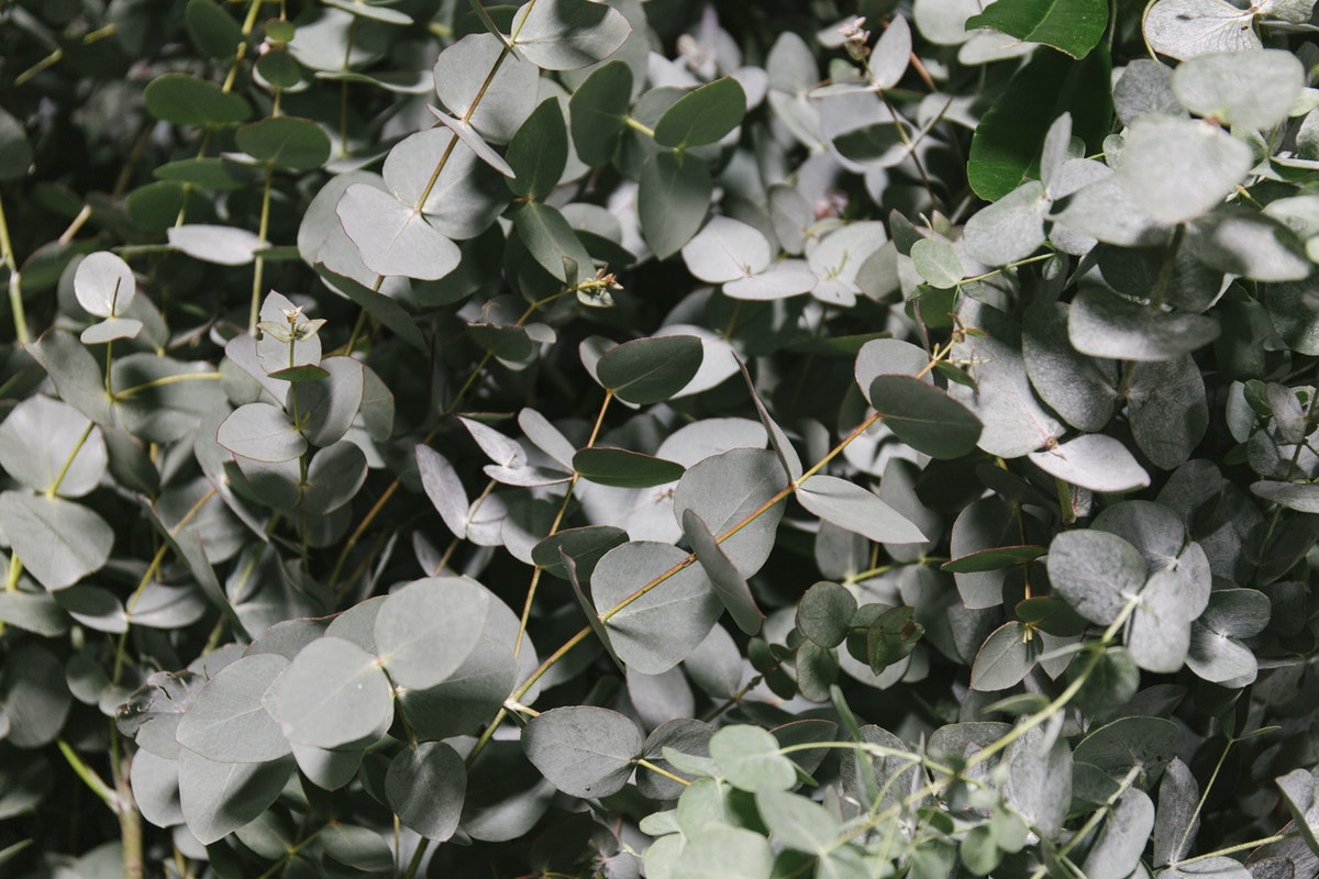 New Covent Garden Flower Market March 2019 A Florists Guide To Scented Flowers And Foliage Rona Wheeldon Flowerona Eucalyptus Cinerea At Gb Foliage