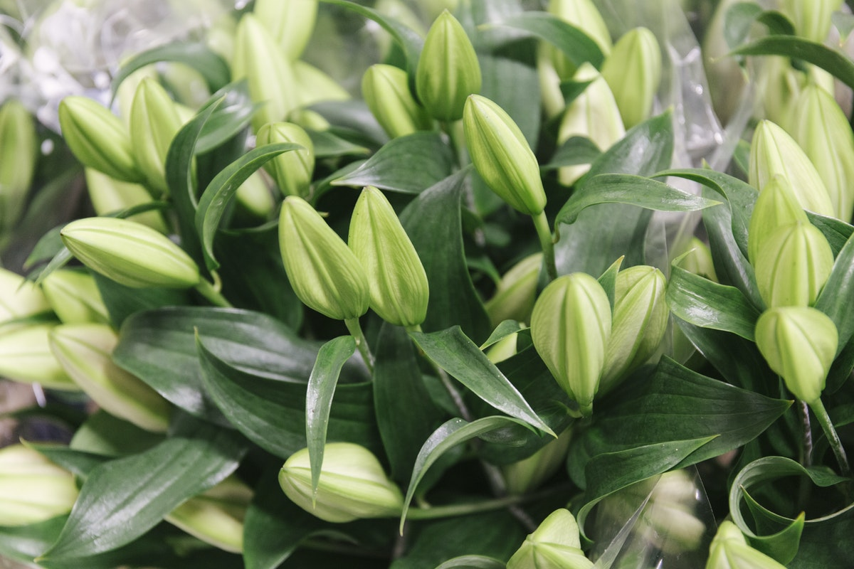 New Covent Garden Flower Market March 2019 A Florists Guide To Scented Flowers And Foliage Rona Wheeldon Flowerona Oriental Lilies At Dennis Edwards Flowers