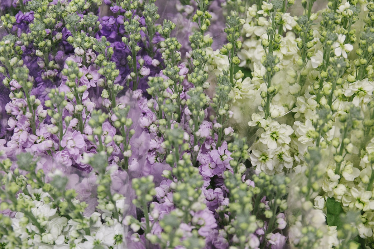 New Covent Garden Flower Market March 2019 A Florists Guide To Scented Flowers And Foliage Rona Wheeldon Flowerona Stocks At Zest Flowers