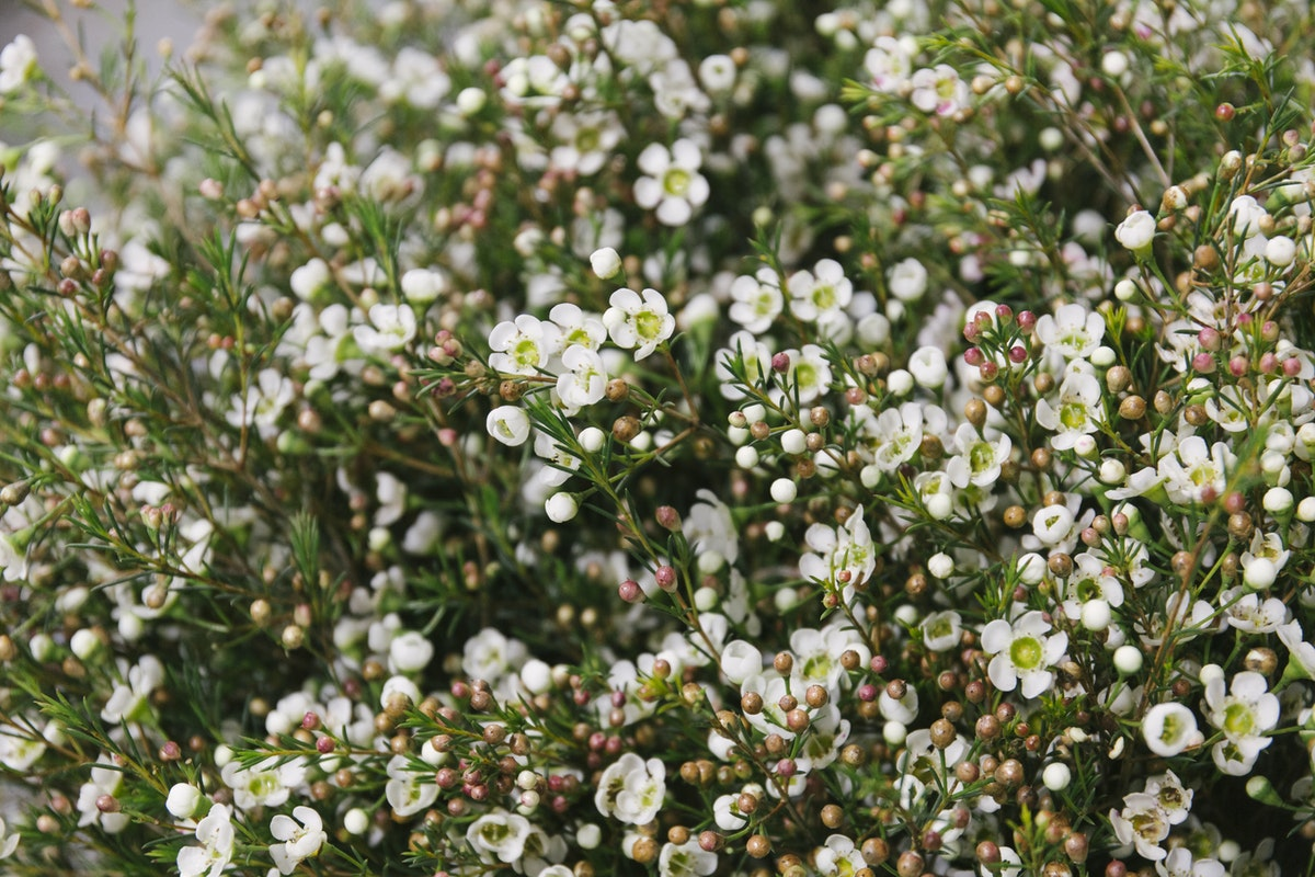 New Covent Garden Flower Market March 2019 A Florists Guide To Scented Flowers And Foliage Rona Wheeldon Flowerona Waxflower At Dennis Edwards Flowers
