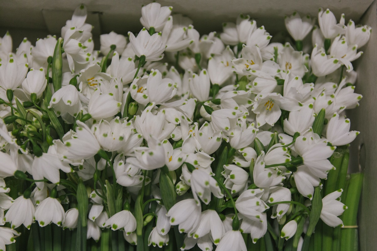 New Covent Garden Flower Market March 2019 In Season Report Rona Wheeldon Flowerona British Snowflakes At Pratley