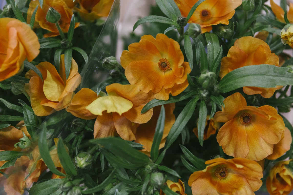 New Covent Garden Flower Market March 2019 In Season Report Rona Wheeldon Flowerona Charis Butterfly Ranunculus At Zest Flowers