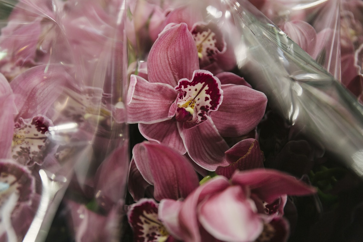 New Covent Garden Flower Market March 2020 In Season Report Rona Wheeldon Flowerona Cymbidium Orchid Red Kerby Merlot At Zest Flowers