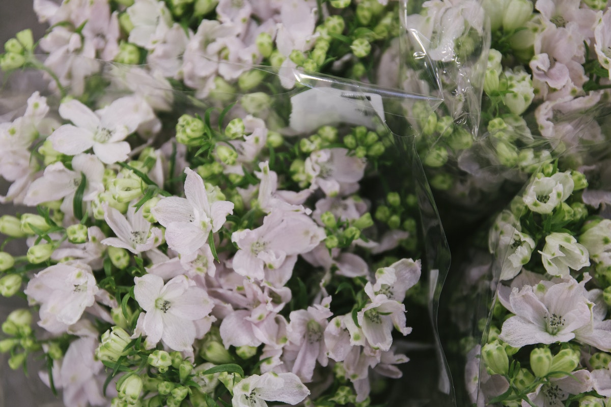 New Covent Garden Flower Market March 2020 In Season Report Rona Wheeldon Flowerona Delphinium Energy Pink At Bloomfield