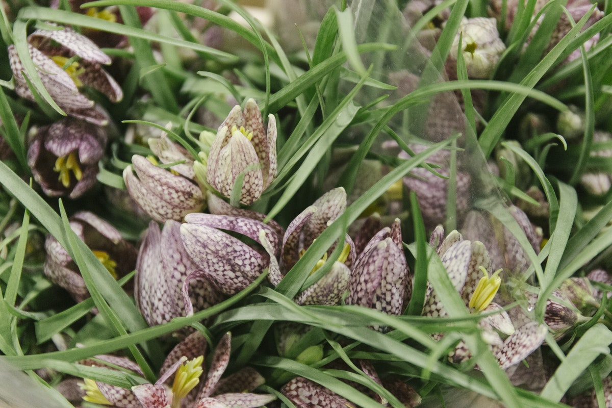 New Covent Garden Flower Market March 2020 In Season Report Rona Wheeldon Flowerona Fritillaria Meleagris At Bloomfield