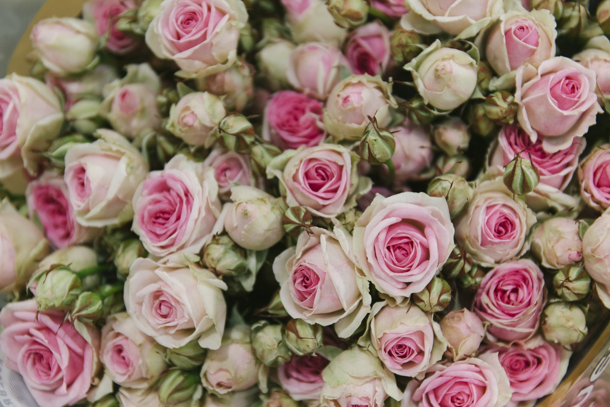 New Covent Garden Flower Market March 2020 In Season Report Rona Wheeldon Flowerona Mimi Eden Spray Roses At Zest Flowers